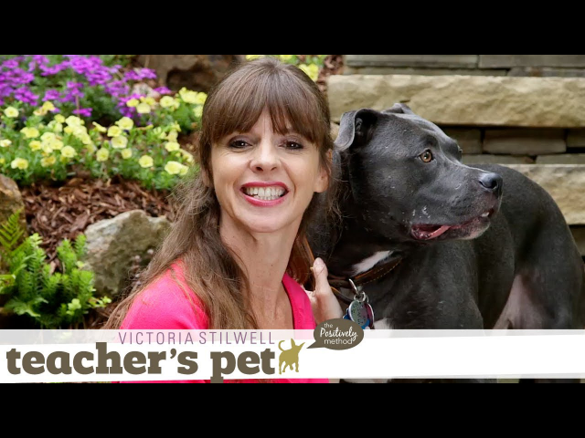 Choosing an Effective and Humane Collar | Teacher's Pet With Victoria Stilwell
