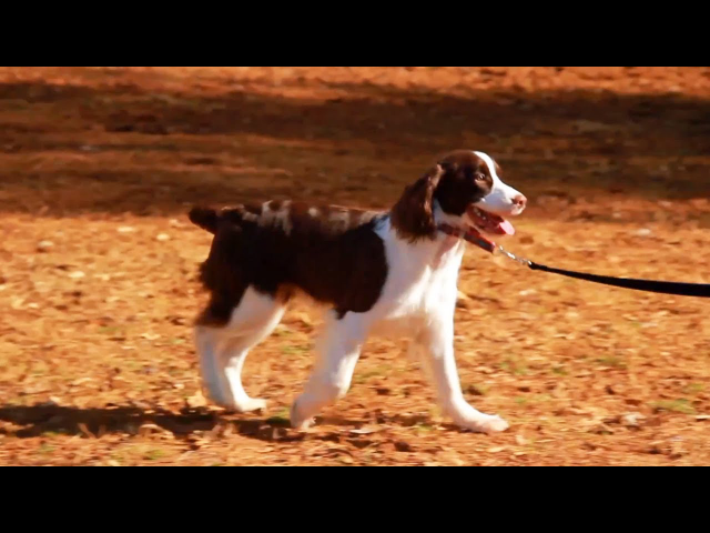 Loose-Leash Walking Outside | Teacher's Pet With Victoria Stilwell